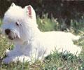 Гипоаллергенные породы собак всего